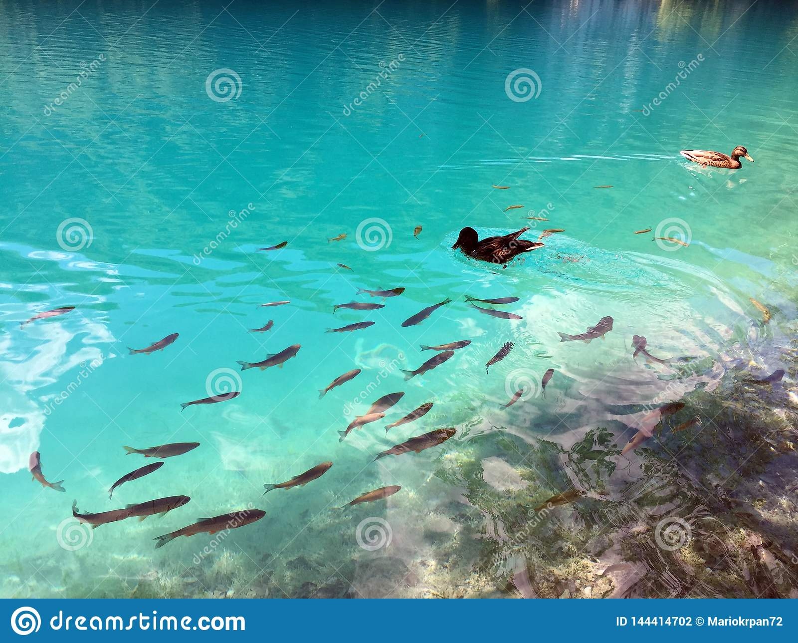 Flora e fauna do jezera de Plitvicka do parque nacional dos lagos Plitvice ou do parque do nacionalni, patrim?nio mundial natural
