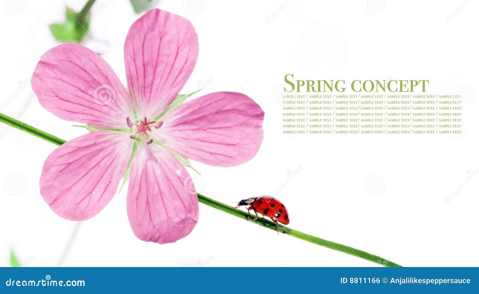 Flora en dameinsect