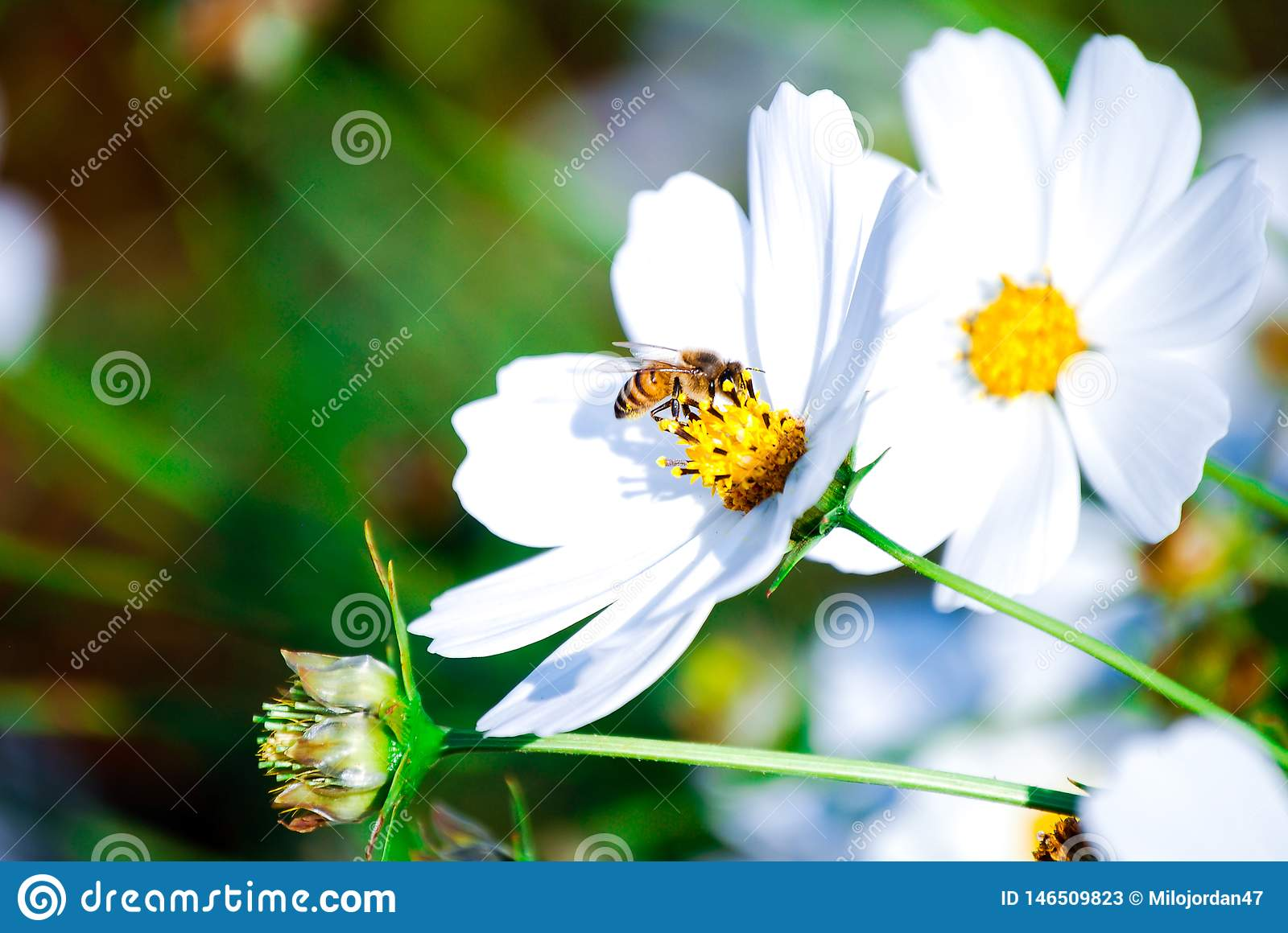Flora flowers, busy bee