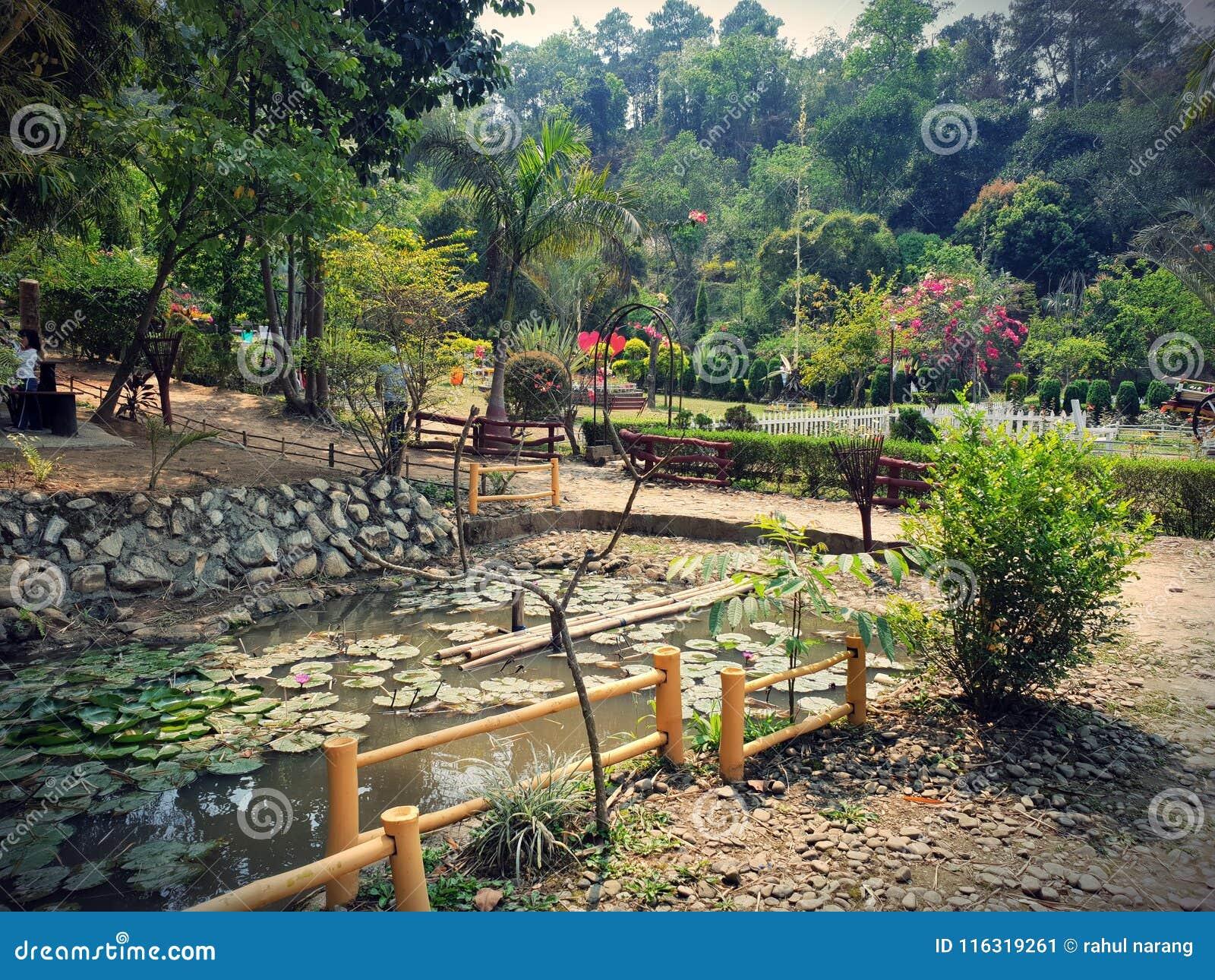Flora och faunor på imphal Awangchein trädgård Dammkronblad och lotusblomma är skönheten av detta ställe