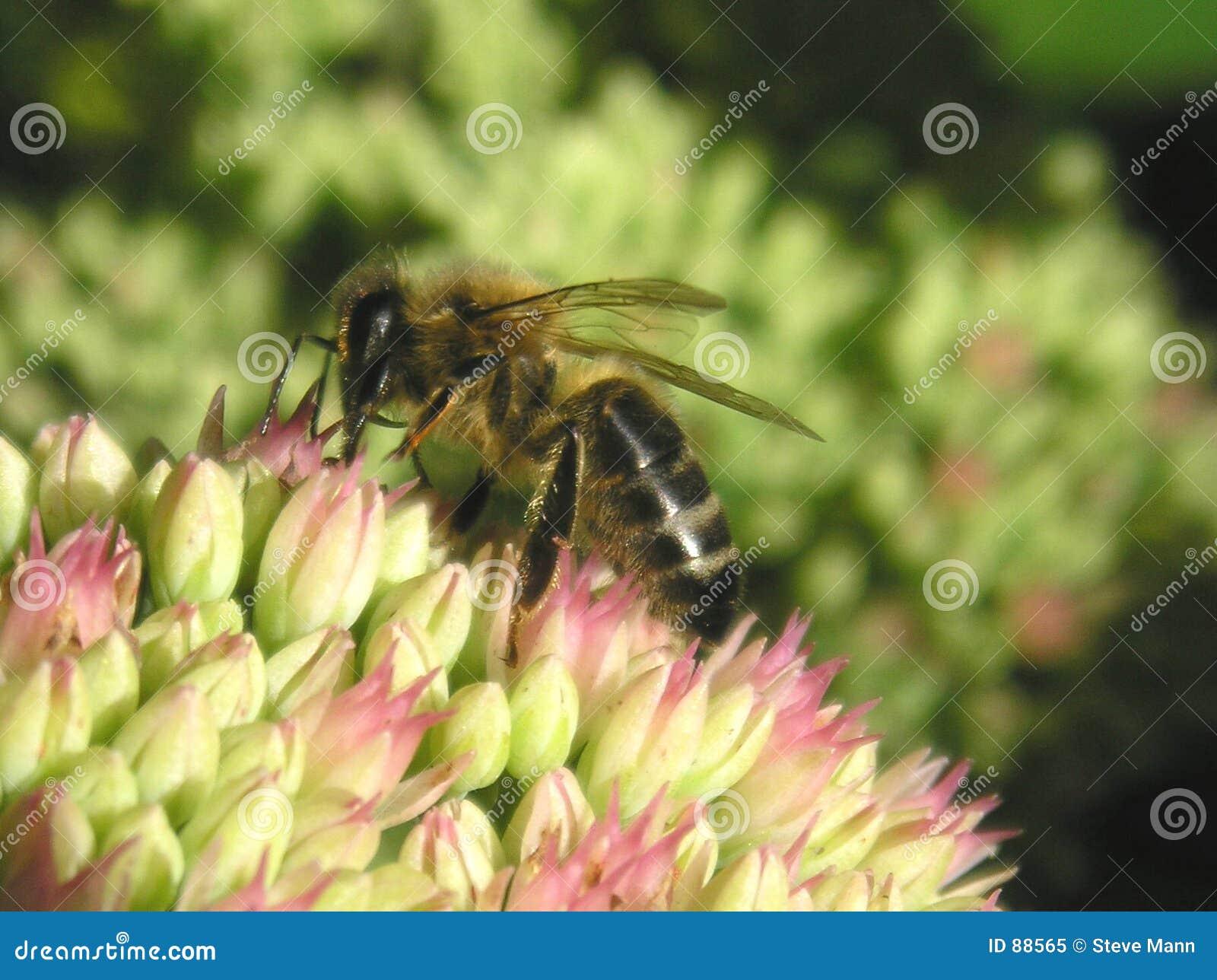 Flora pszczół