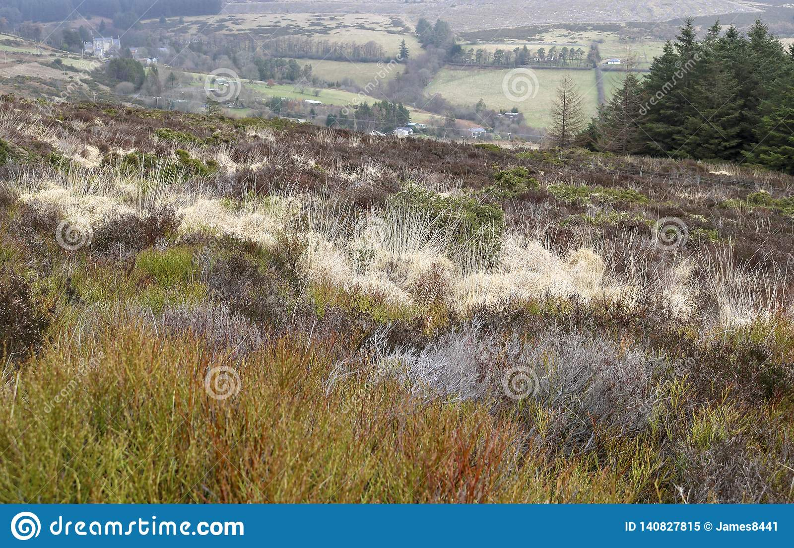 Flora van Ierland