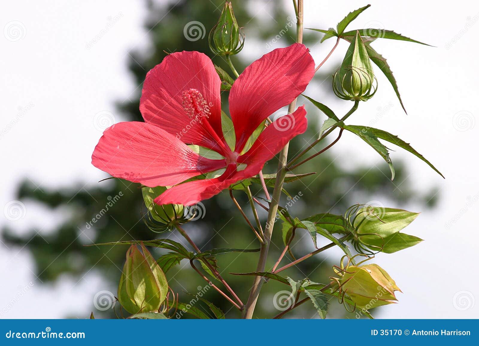 Download Floración foto de archivo. Imagen de hojas, jardín, estación - 35170