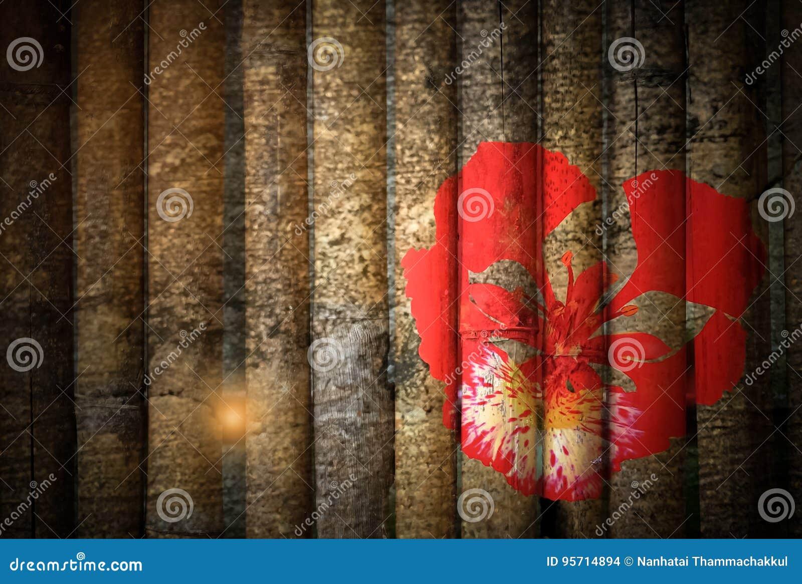 Floración de Poinciana real rojo