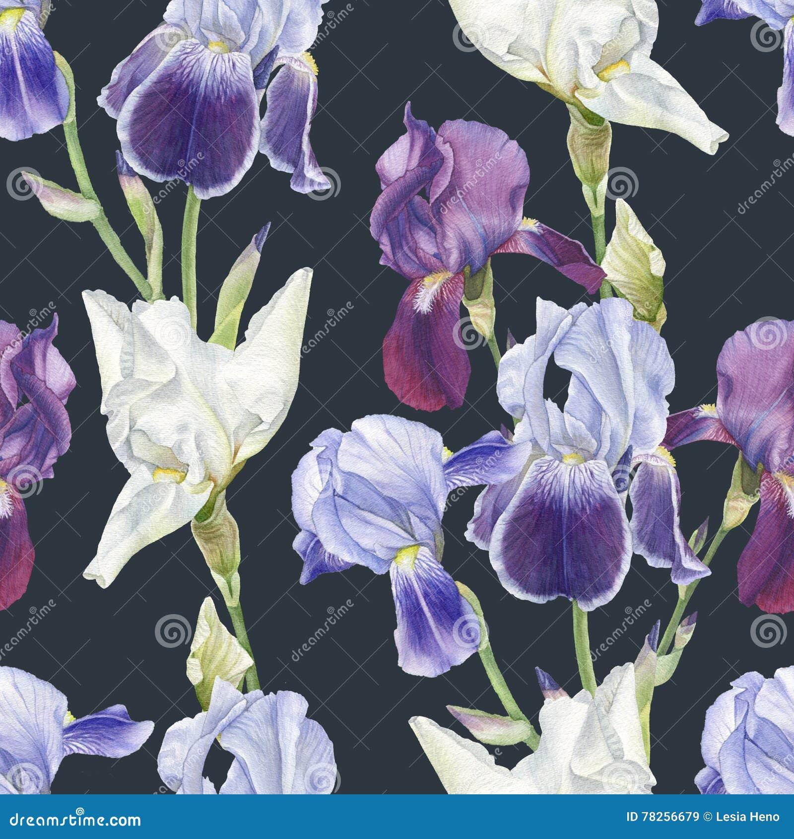 Floral άνευ ραφής σχέδιο με τις ίριδες watercolor