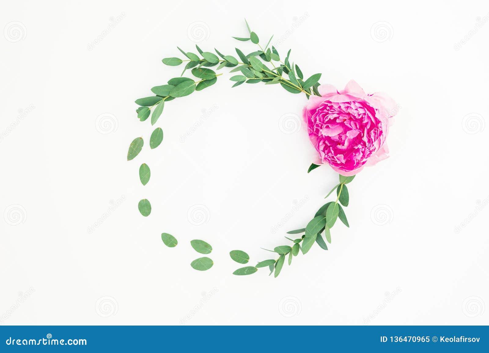 Floral στρογγυλό πλαίσιο με το ρόδινους peony λουλούδι, το hypericum και τον ευκάλυπτο στο άσπρο υπόβαθρο Επίπεδος βάλτε, τοπ άπο