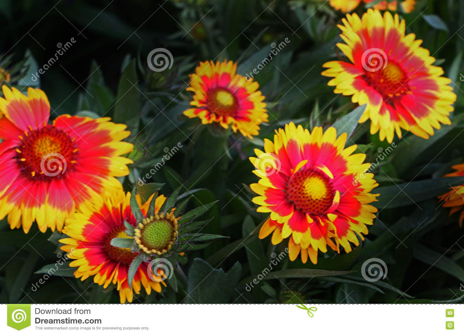 Floral συστάδα
