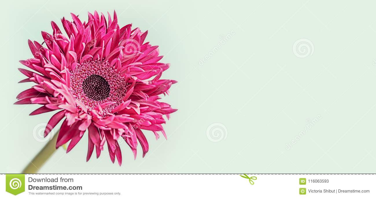 Floral υπόβαθρο εμβλημάτων με στενό επάνω του ρόδινου λουλουδιού