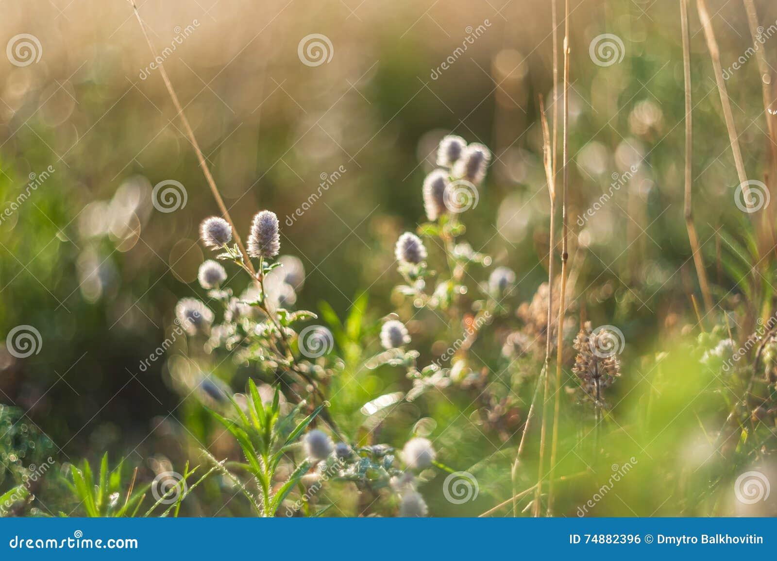 Floral υπόβαθρο με τα άγρια λουλούδια