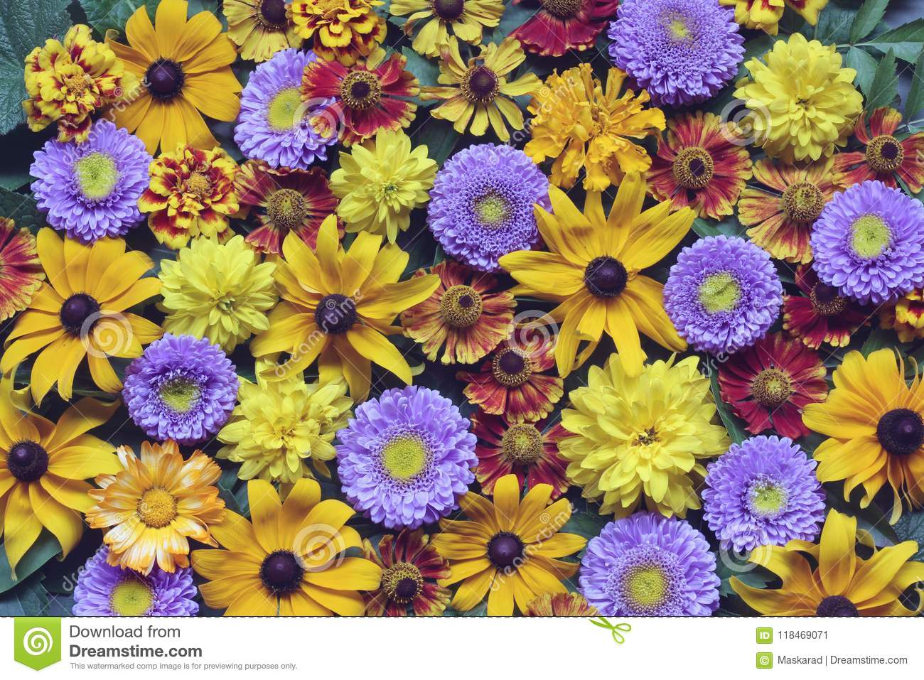 Floral Background Of Autumn Flowers, Top View. Rudbeckia And