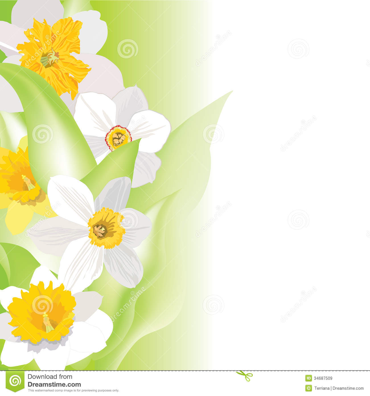 daffodil border stock illustrations u2013 374 daffodil border stock