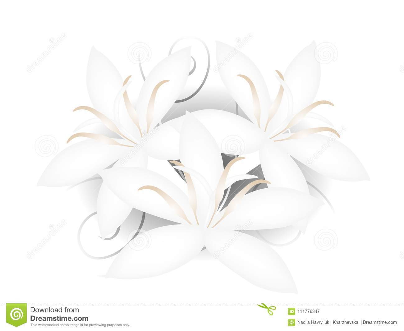 Floral background with open white flowers of coffee.