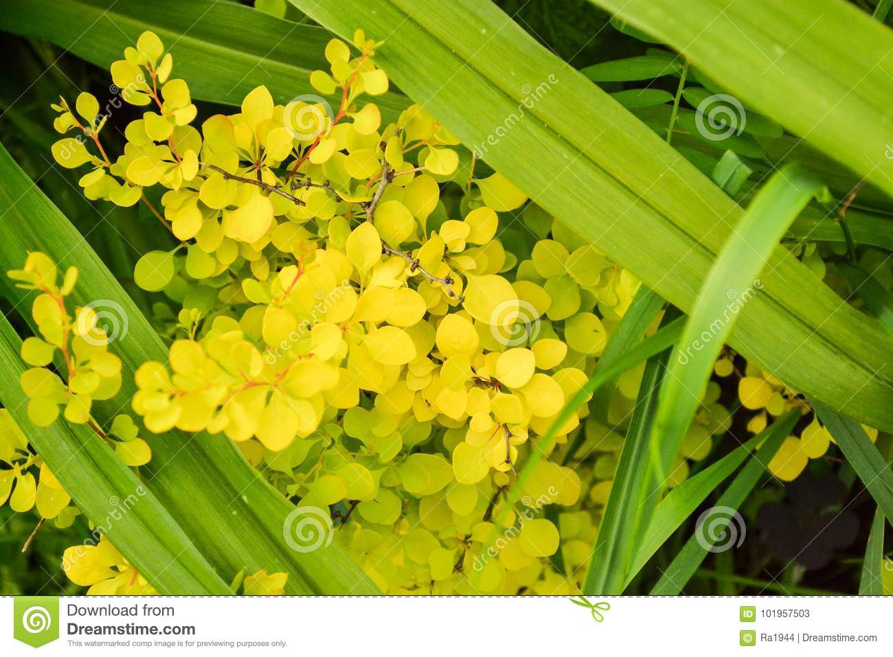 Floral Background Spring Flowers Of Yellow Color Close-up On A Green ...