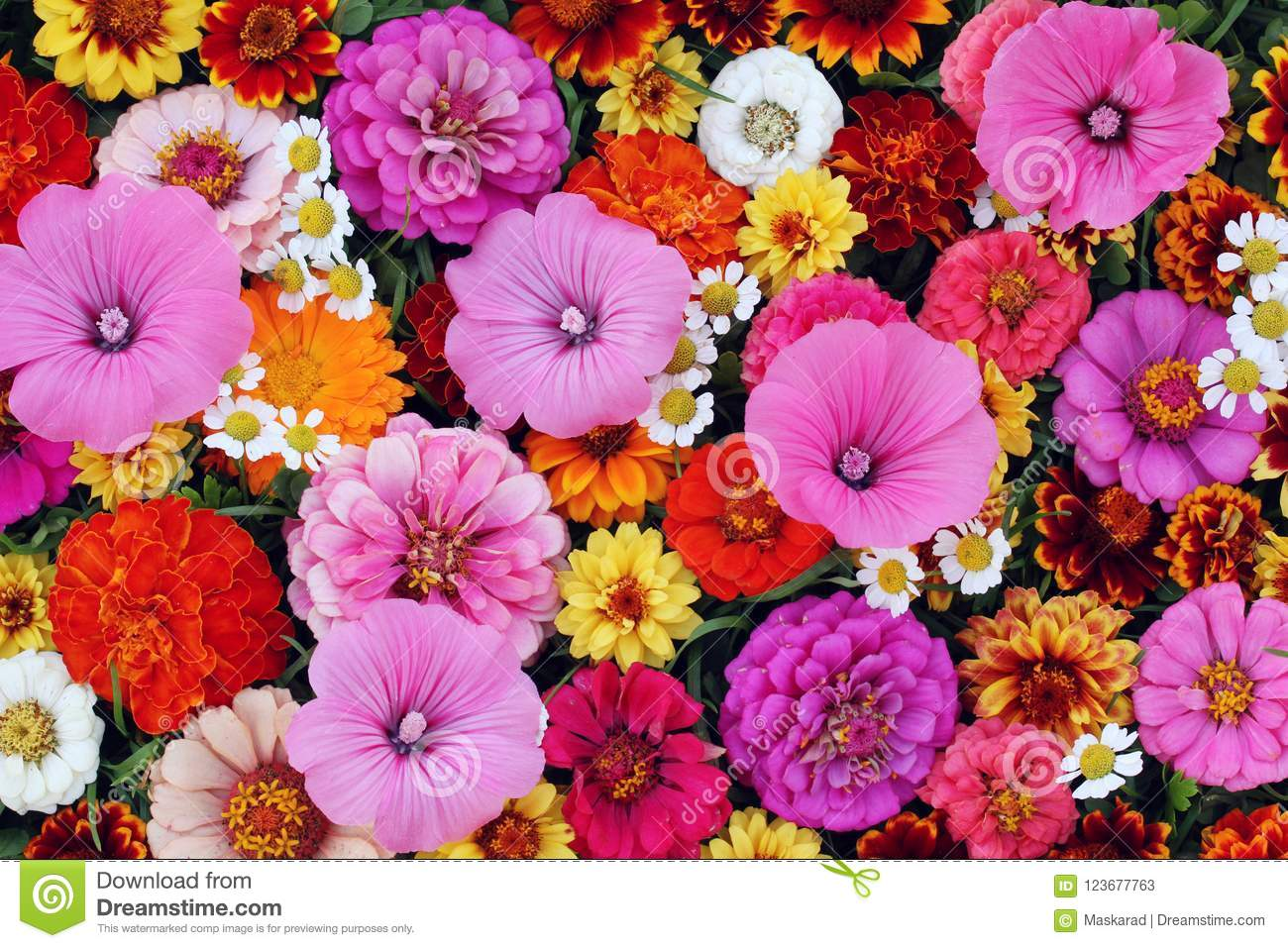 Floral Background, Top View. Texture Of Various Cultivated