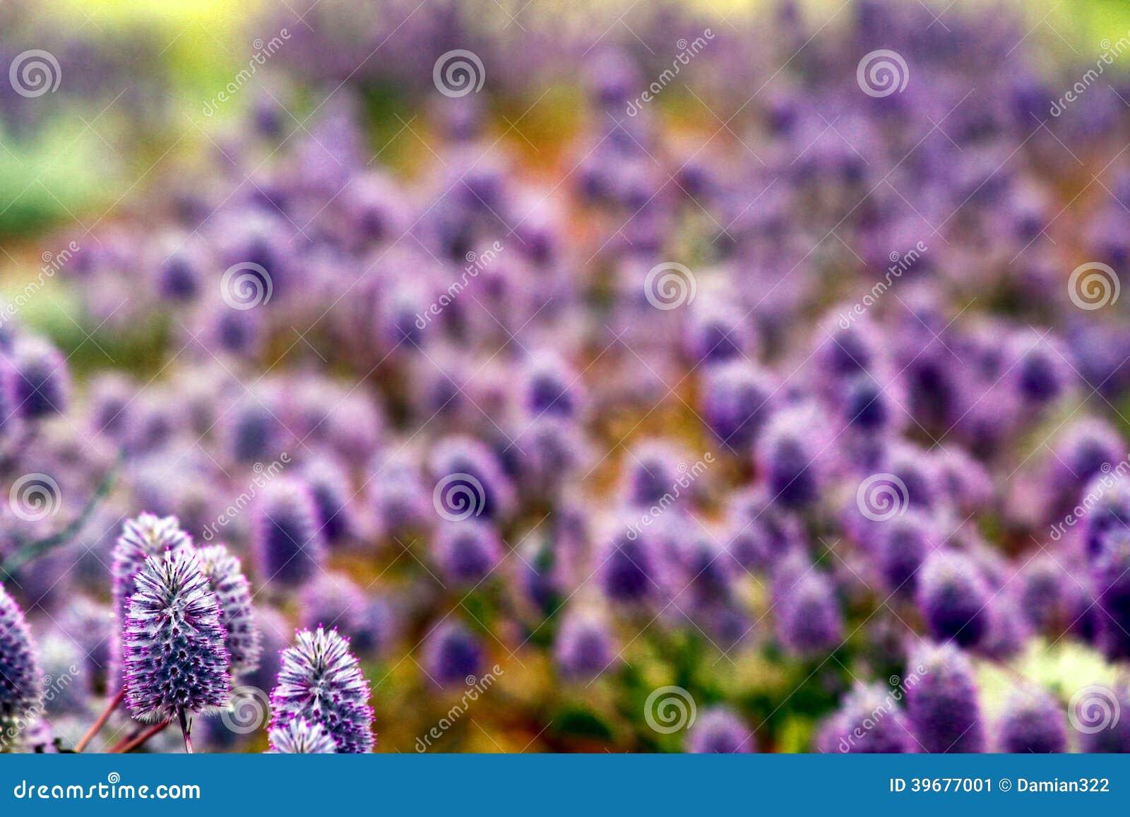 Floral Background Of Violet Pink Flowers Australia Stock Image