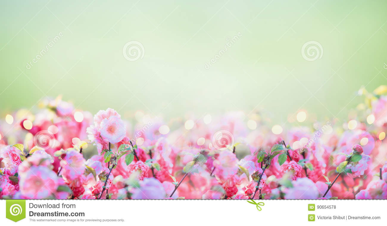 Floral banner with pink pale blossom at green nature background in garden or park