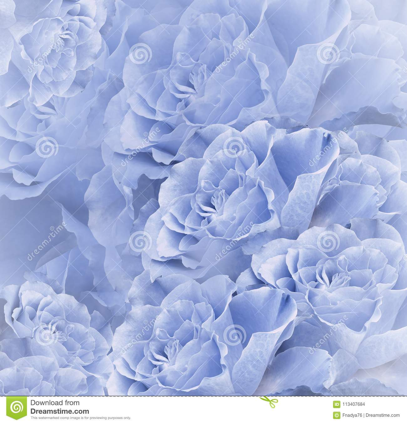 Floral Blue Beautiful Background. Flower Composition