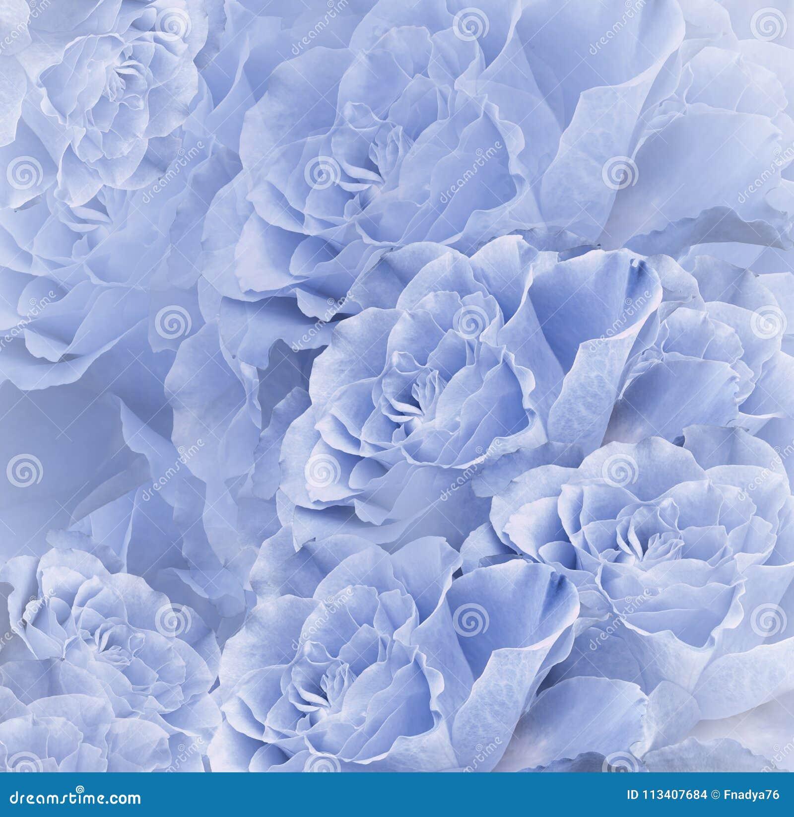 Floral Blue Beautiful Background Flower Composition Bouquet Of