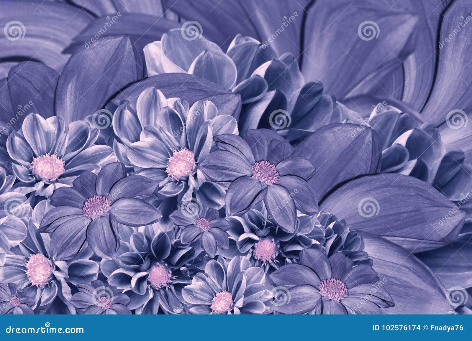 Floral Blue Violet Background Of Flowers Of Dahlia Bright Flower