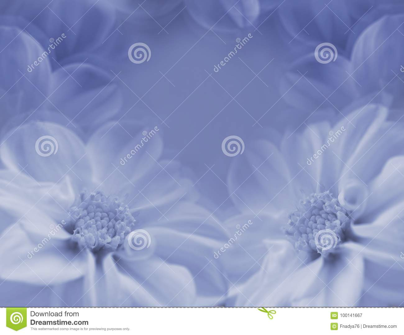 Floral Blue White Beautiful Background Large White Flowers Of