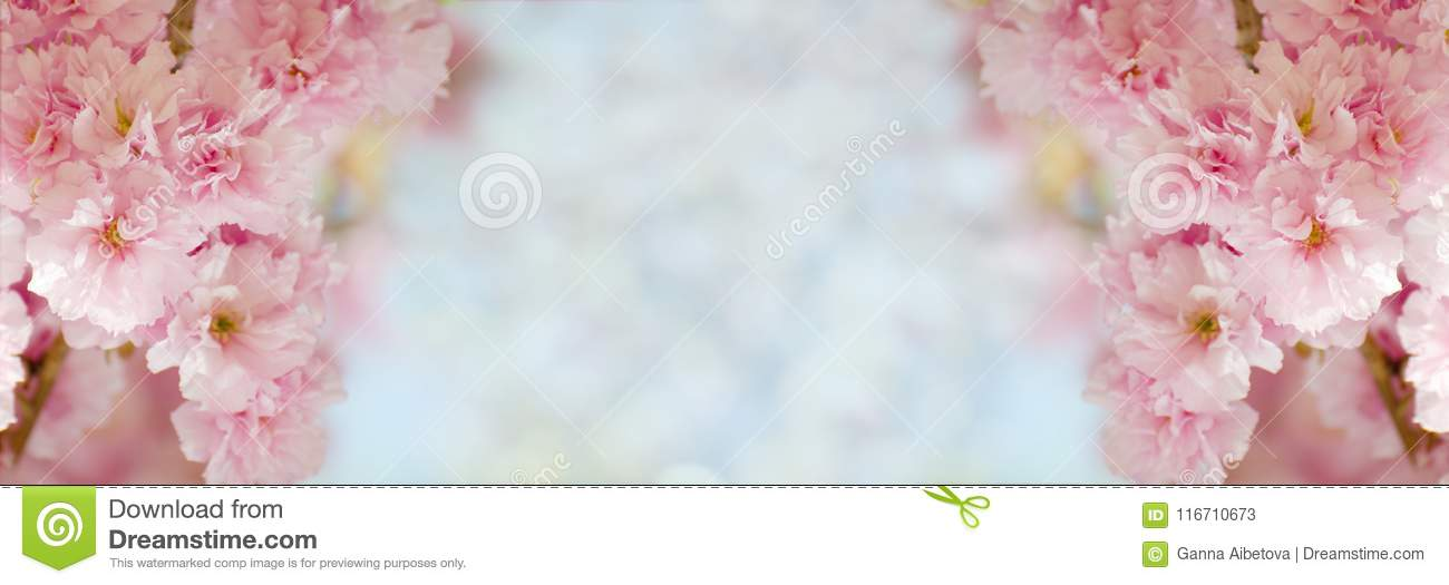 4488ffc5a88 Floral border with beautiful sakura blooming in the sunny day. Romantic  banner with flowers against