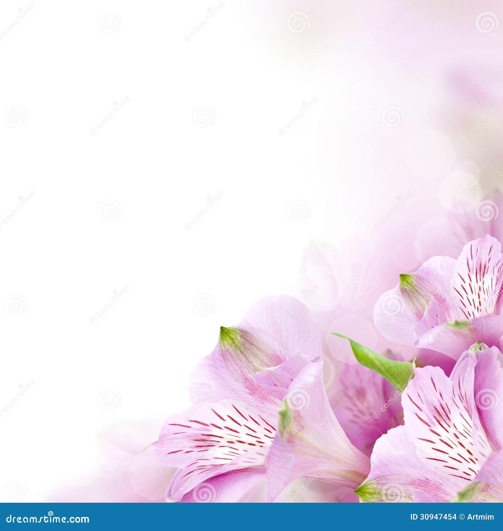 Floral Border Blossom Background Stock Images Image