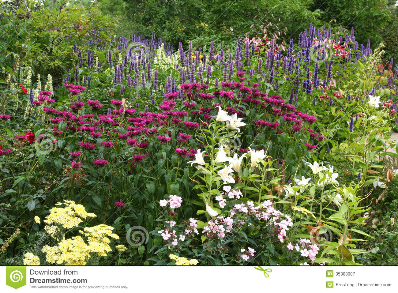 Floral border in an english garden royalty free stock for Beautiful flowers to plant in your garden