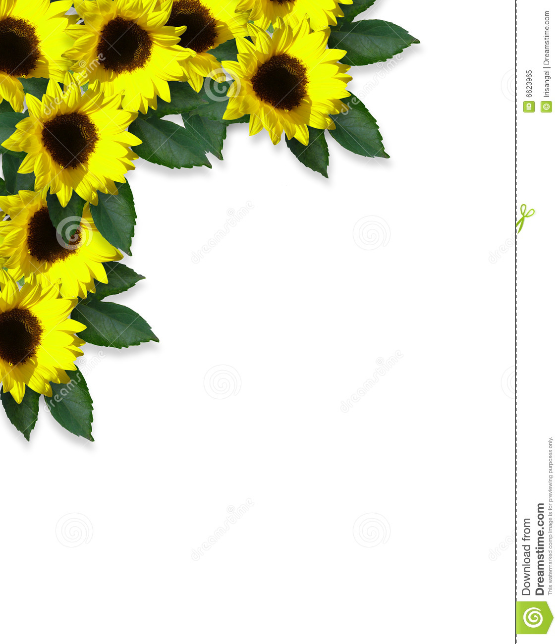 clip art borders sunflowers - photo #8