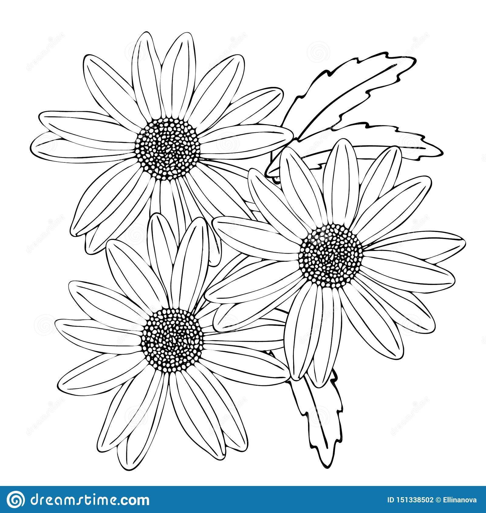 Floral Coloring Template With Black Line Flower Stock Vector Illustration Of Fashion Retro 151338502