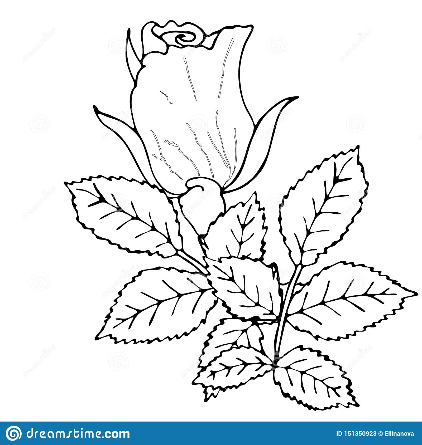 - Floral Coloring Template With Black Line Flower Stock Vector