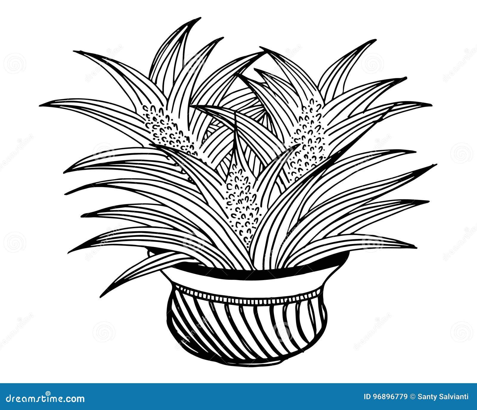 Floral De Griffonnage De Vecteur Illustre Bouquet Des Fleurs Dans Un