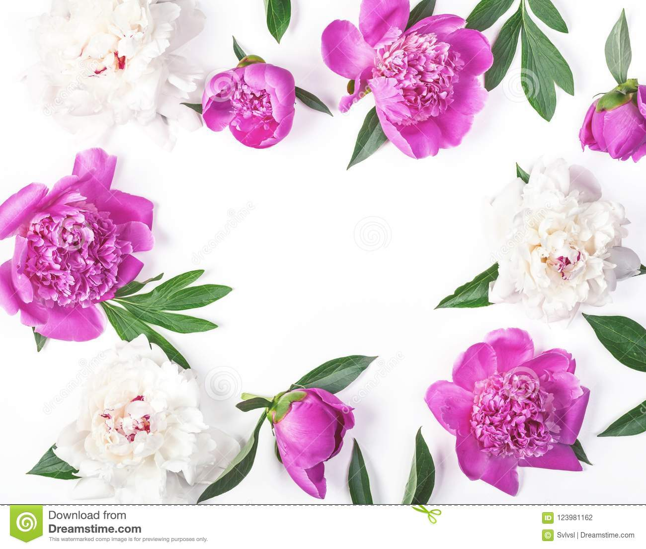 Floral frame made of pink and white peony flowers and leaves isolated on white background. Flat lay.