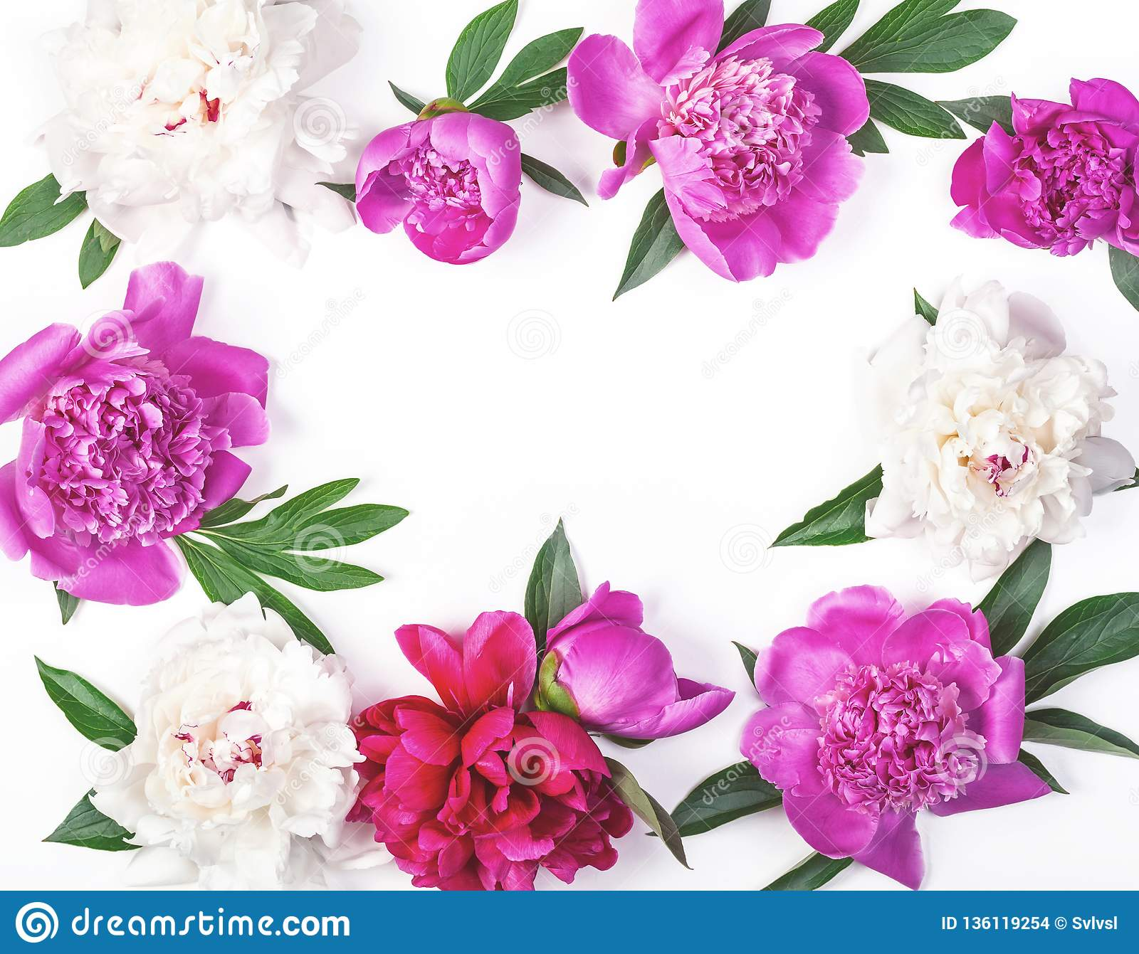 Floral frame made of pink and white peony flowers and leaves isolated on white background. Flat lay
