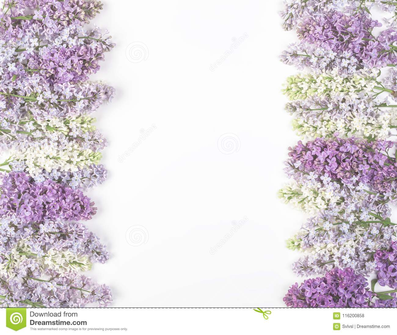 Floral frame made of spring lilac flowers isolated on white background. Top view with copy space.