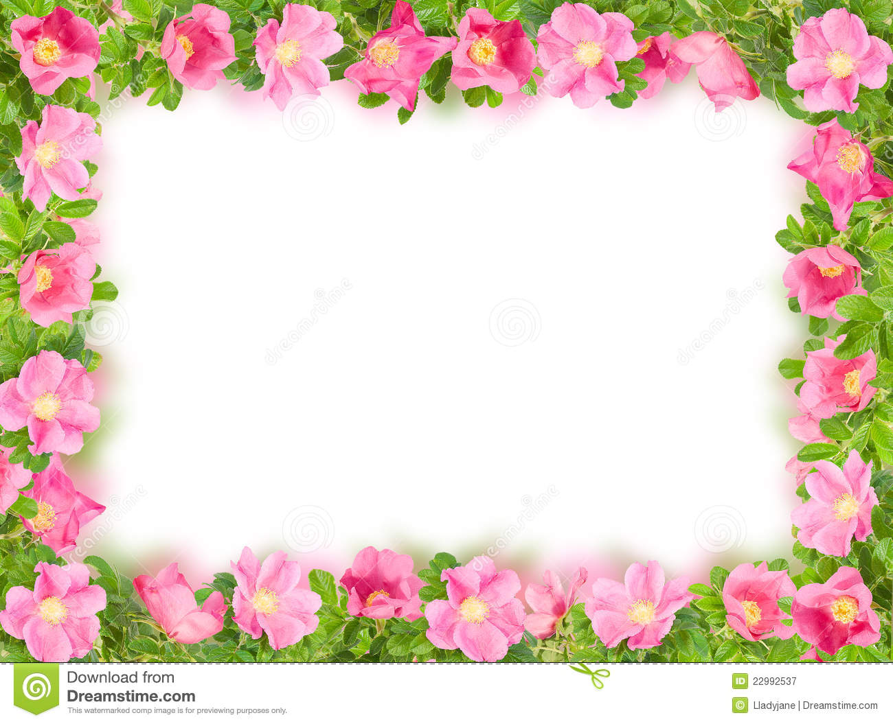 floral frame with pink briar on white royalty free stock photography