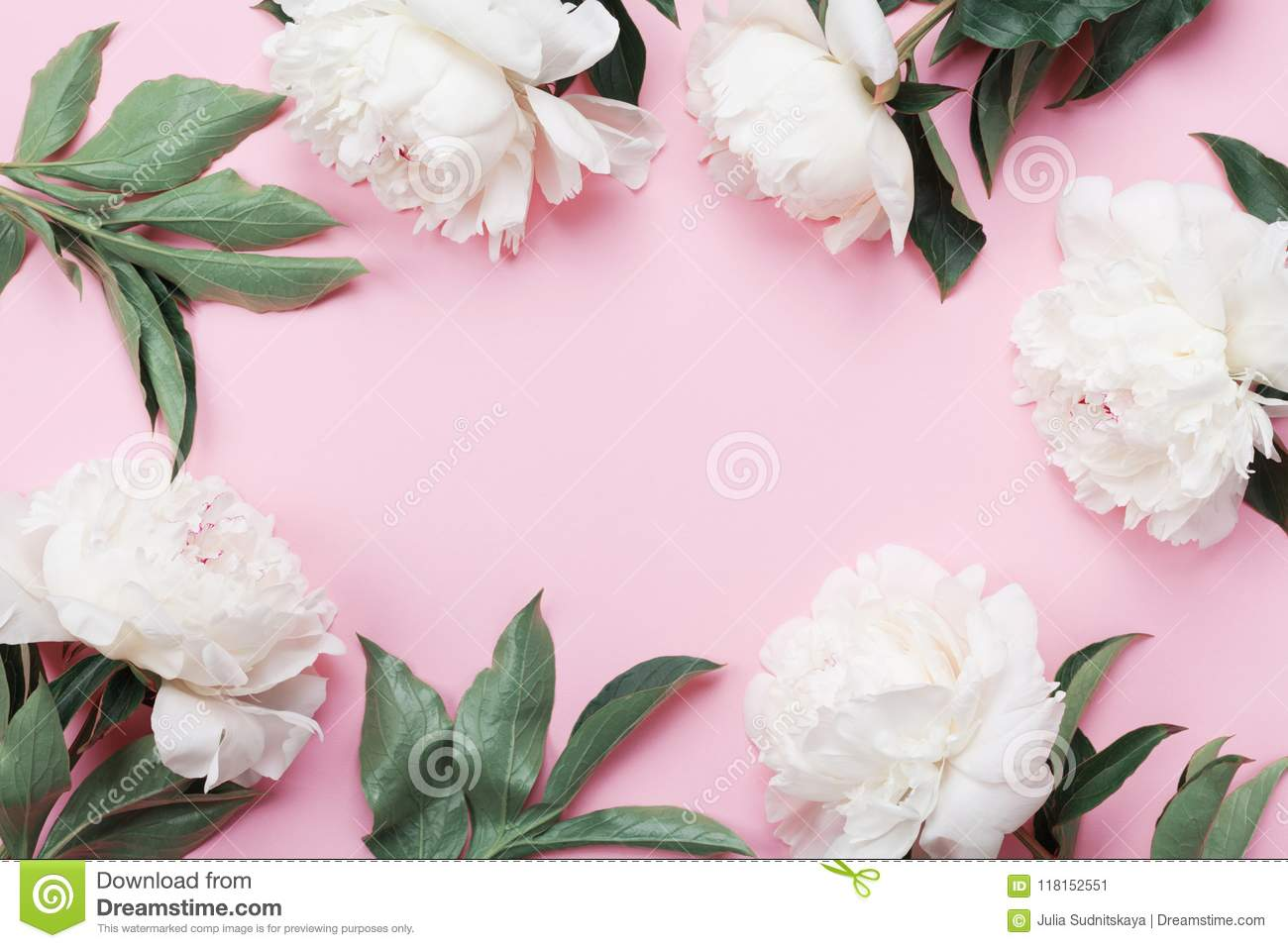 Floral frame of white peony flowers on pink pastel table top view download floral frame of white peony flowers on pink pastel table top view and flat lay mightylinksfo