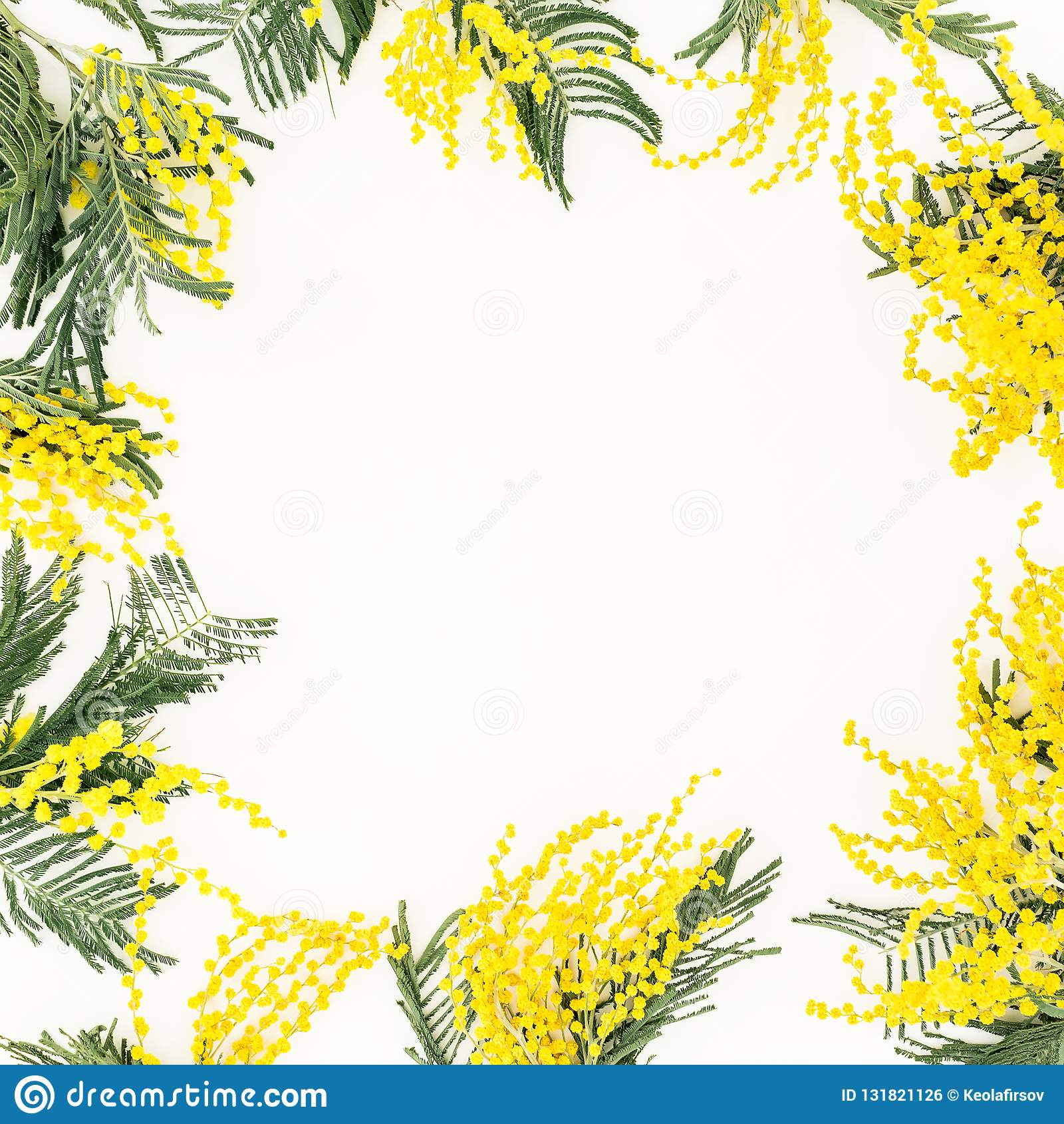Floral frame of yellow mimosa branches on white background. Flowers of woman day. Flat lay, top view