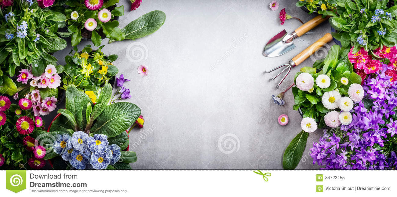 Floral Gardening Background With Variety Of Colorful Garden