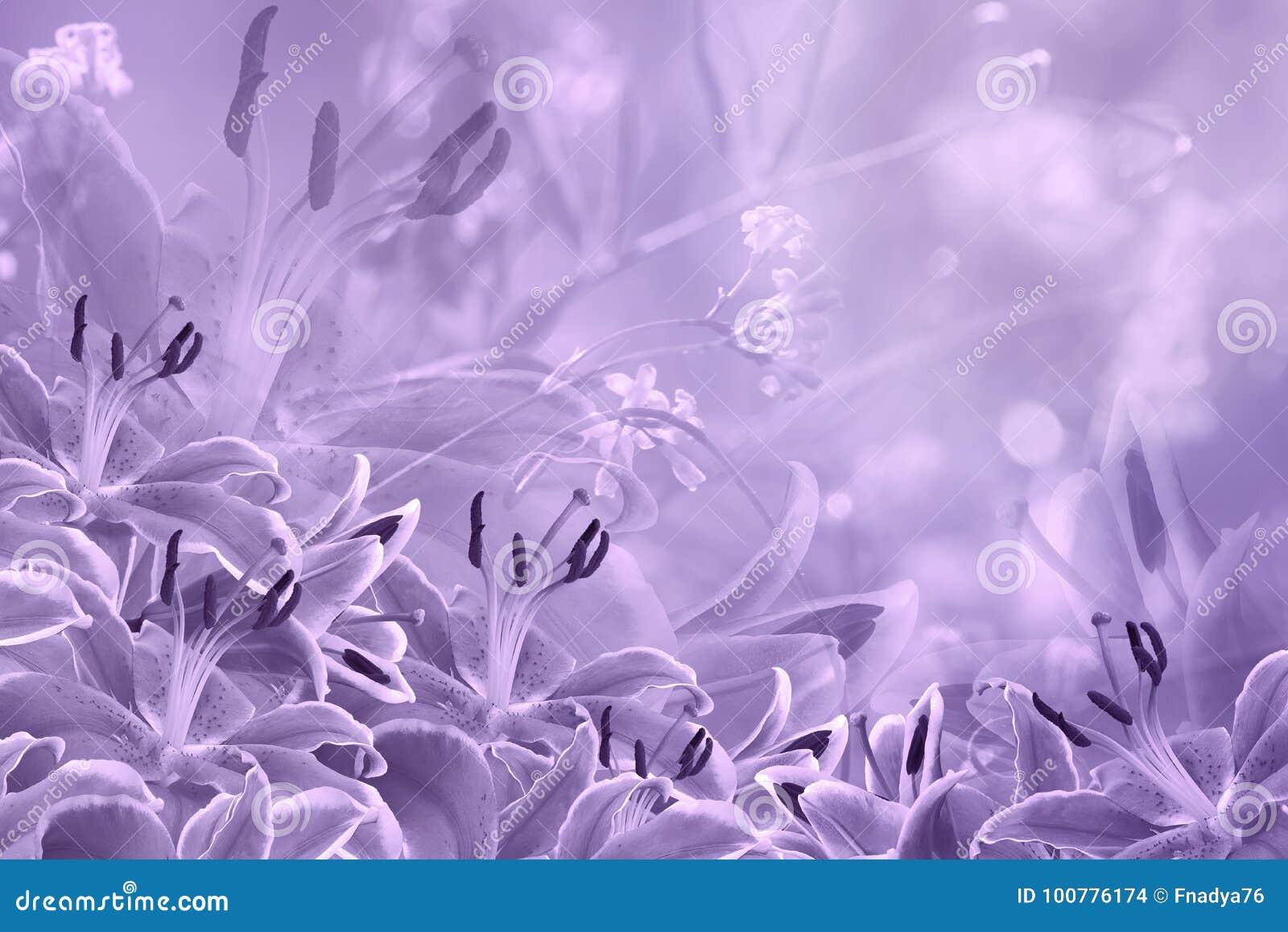 Floral Light Violet Beautiful Background Flower Composition Of