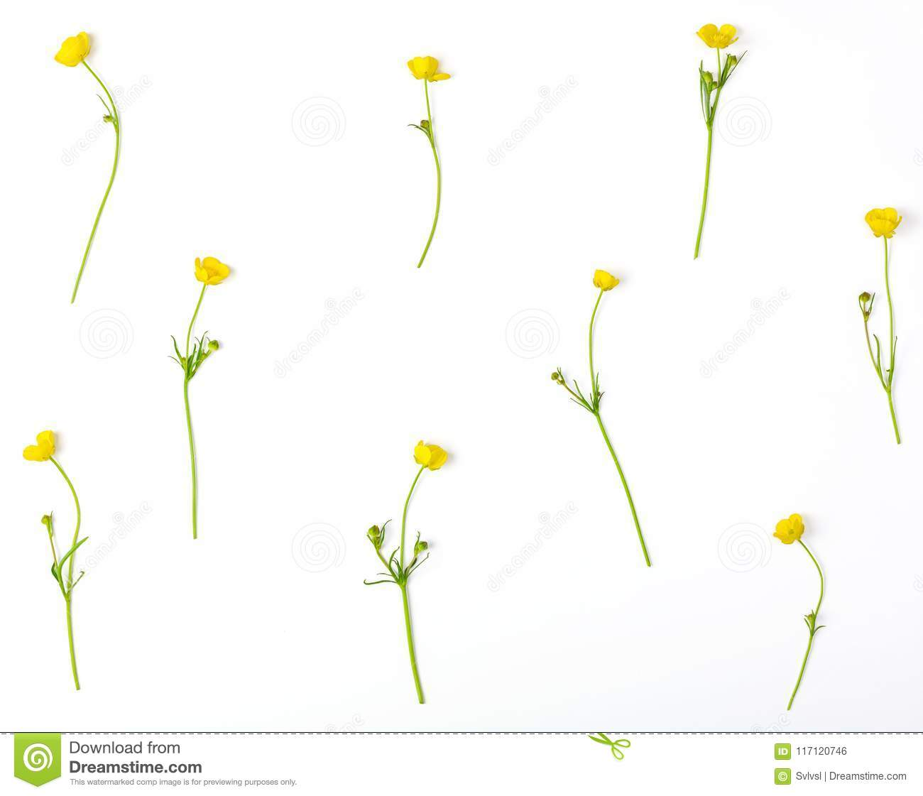 Floral pattern made of yellow buttercups flowers isolated on white background. Flat lay.