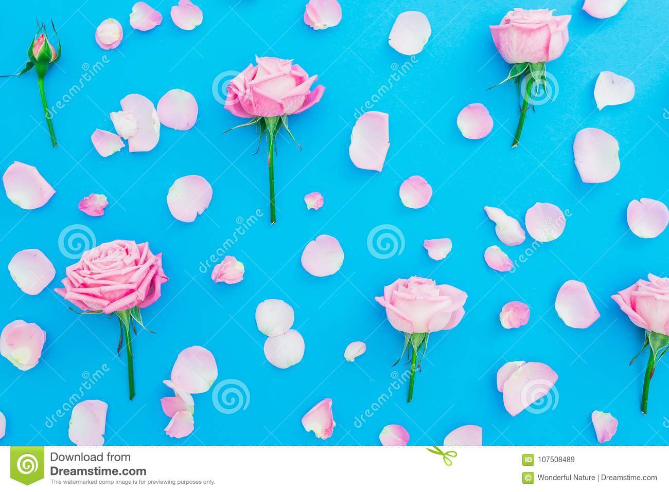 d4875c44fe05a Floral pattern with pink roses buds and petals on blue background. Flat  lay