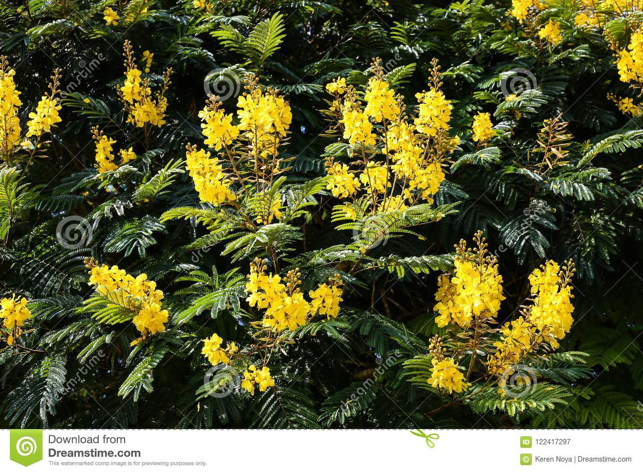 A Floral Pattern Of Yellow Flowers Surrounded By Green Leaves Stock