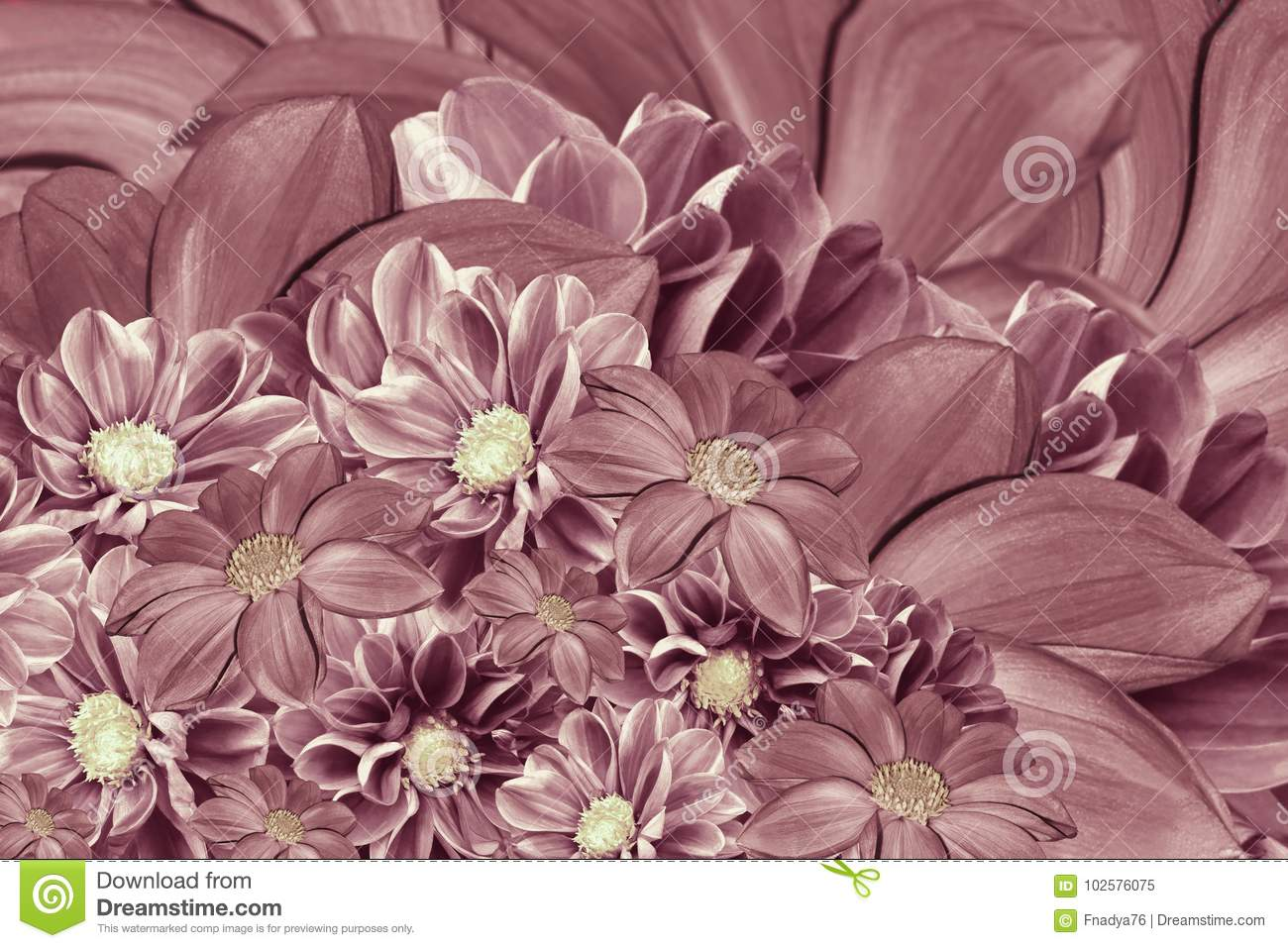 Floral pink pearl background of flowers of dahlia bright flower download floral pink pearl background of flowers of dahlia bright flower arrangement a izmirmasajfo