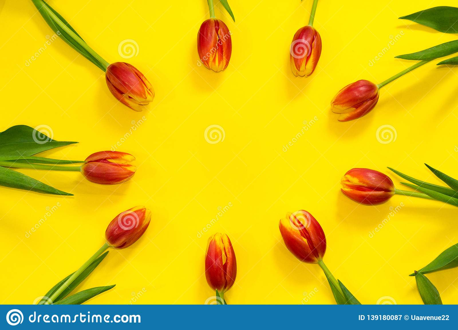 Floral red tulip frame on bright yellow background with copy space in center. Hello spring. Concept of greeting card. celebrating