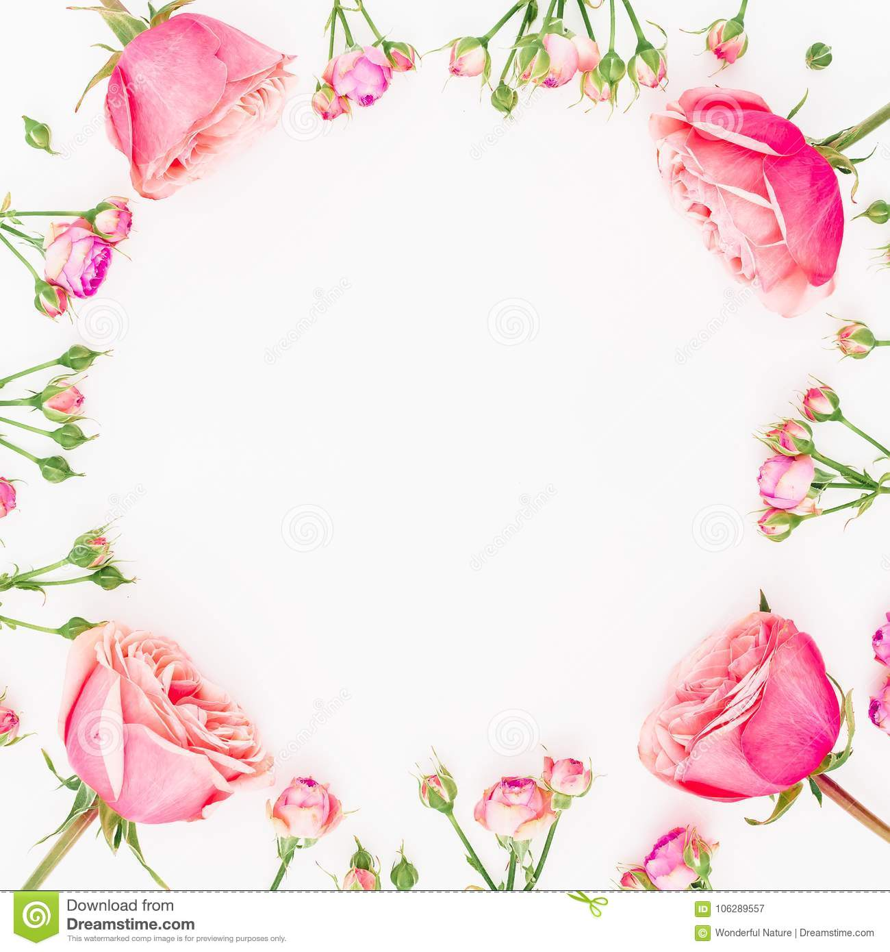 Floral round frame made of pink roses isolated on white background. Flat lay, top view. Valentines day background.