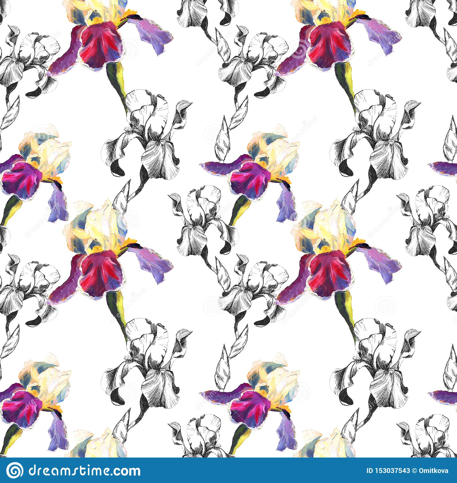 Floral seamless pattern with hand drawn ink and oil iris flowers on white background. Flowers lined up in harmonious
