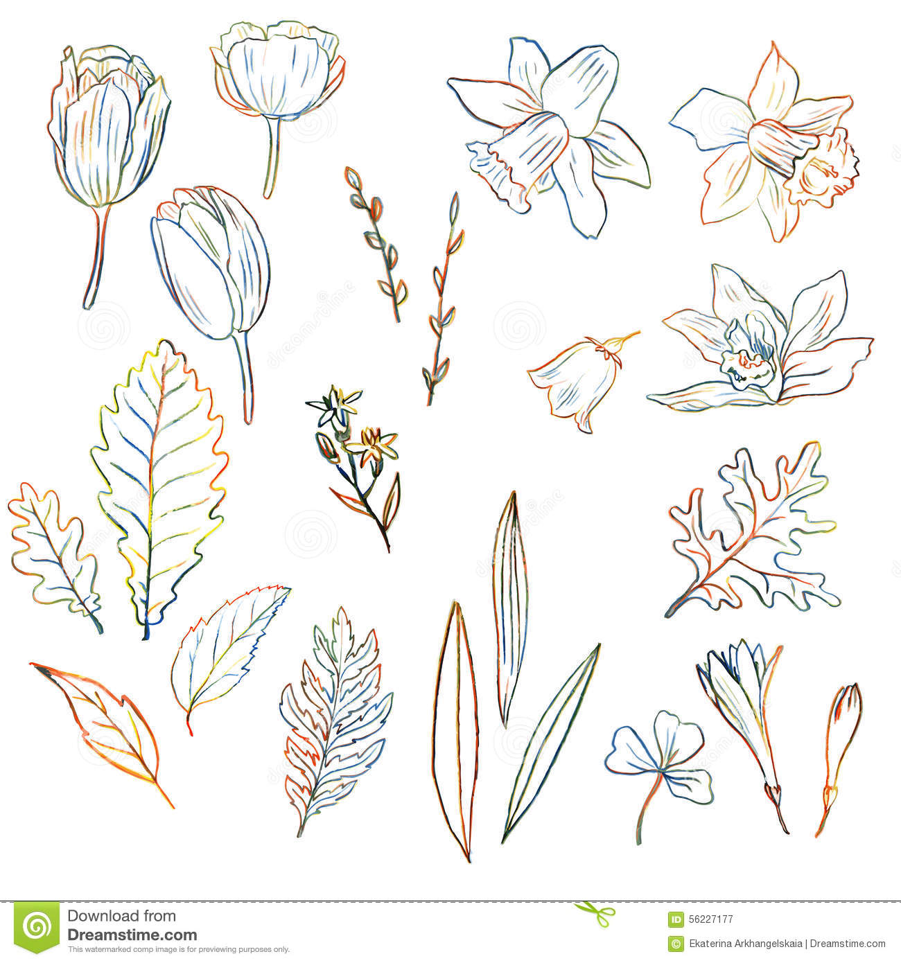 Line Drawing Spring Flowers : Colored hand drawn spring orchid flowers royalty free