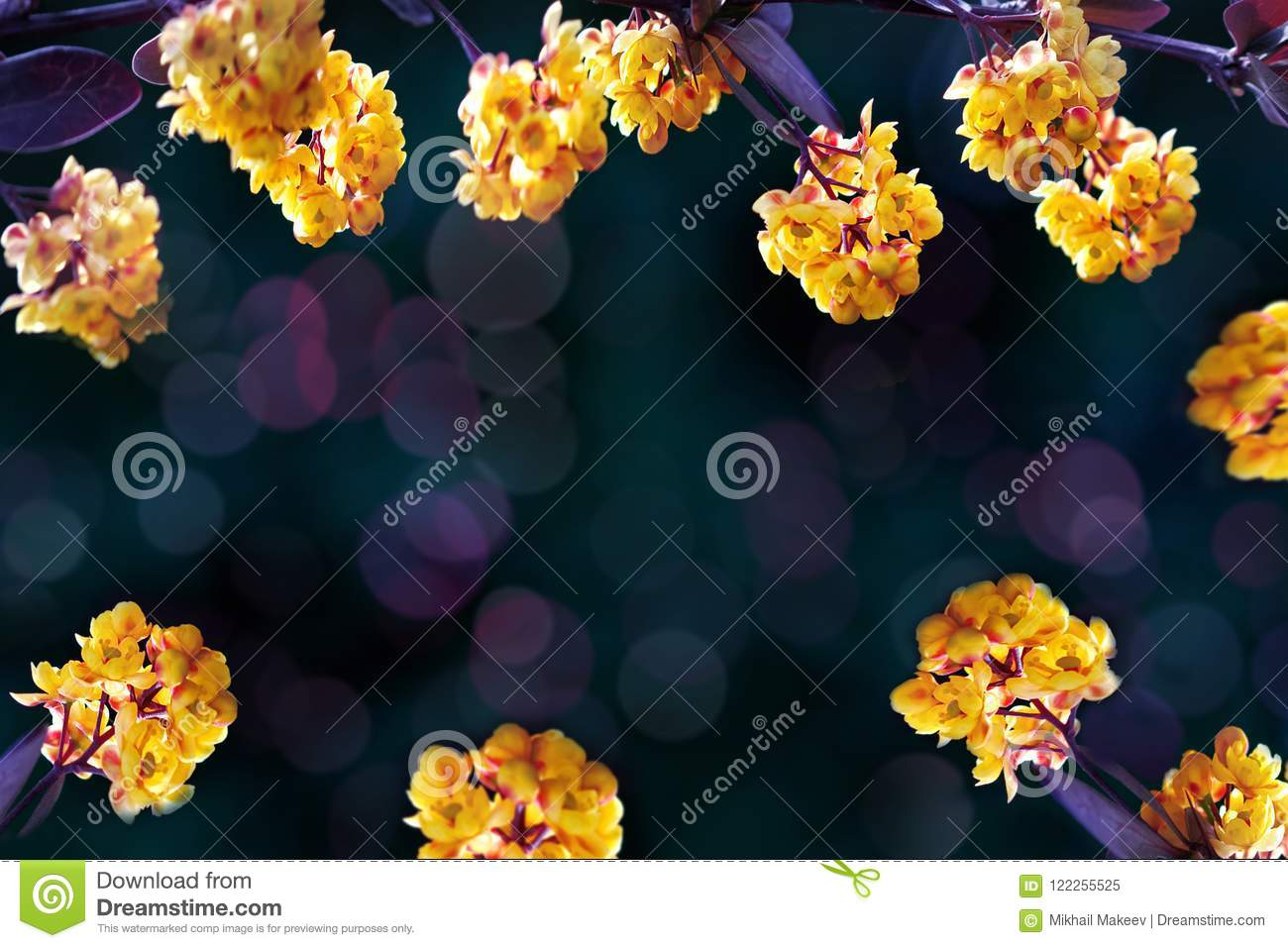 Floral summer background. Beautiful inflorescences of yellow flowers on a purple and dark green background. Artistic summer image.
