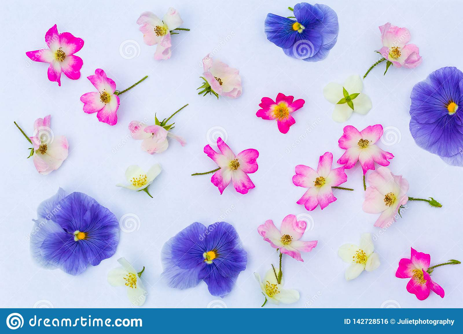 Floral summer background on white background royalty free stock image