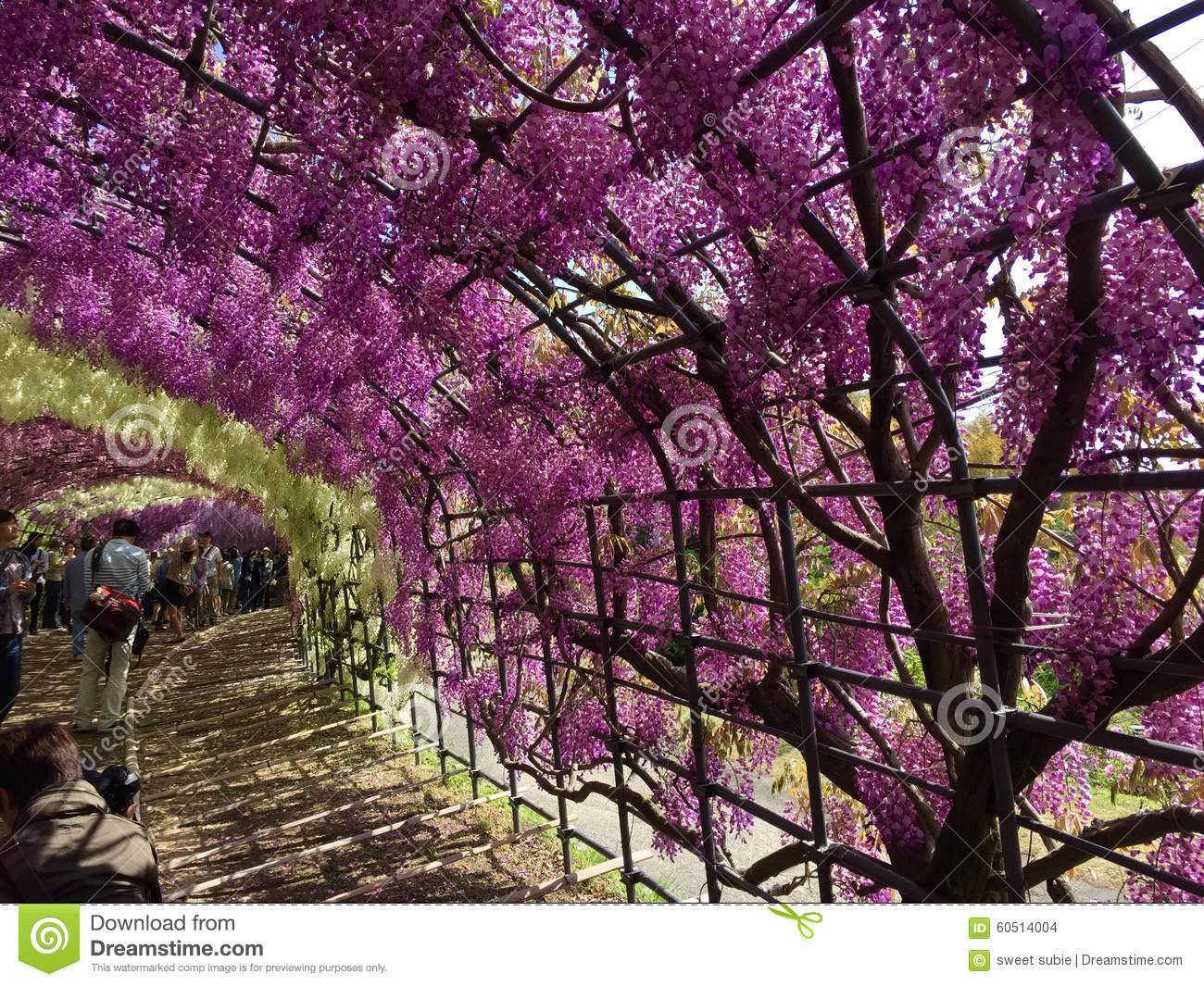floral tunnel in japan editorial stock image image 60514004